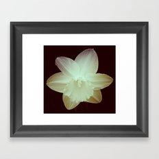 Daffodil 3 Framed Art Print