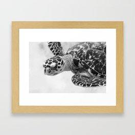 Hawksbill black and white Framed Art Print