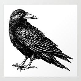 Crow/Raven Art Print