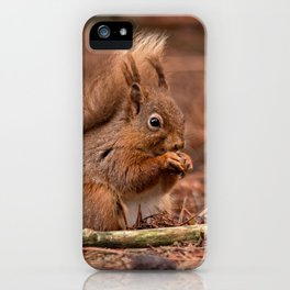 Nature woodland animals Red squirrel by a log iPhone Case