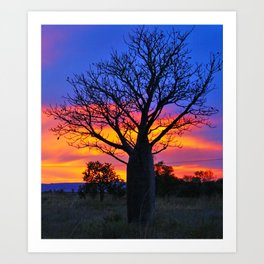 Pink and Purple Sky behind Boab Art Print