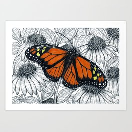 Monarch butterfly on coneflowers  Art Print