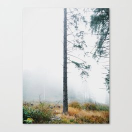 Tree Trunk Lost in The Fog Canvas Print