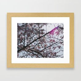 Sakura Pattern 2 Framed Art Print