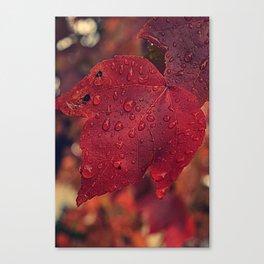 Fall Drops II  Canvas Print