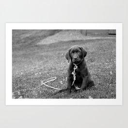 B&W Puppy Art Print