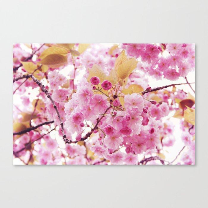 Bloom, bloom, bloom! Canvas Print