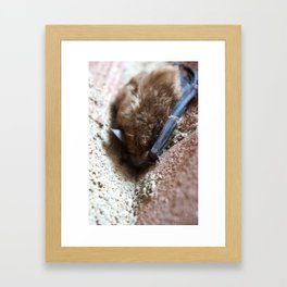 Little brown bat Framed Art Print
