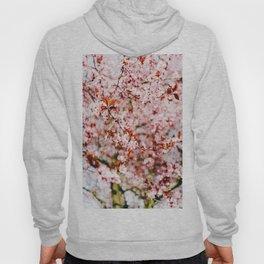 Cherry Blossom Tree (Color) Hoody