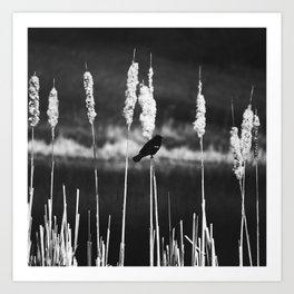 Blackbird Story Art Print