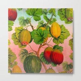 Gooseberry Fruit Branch Metal Print