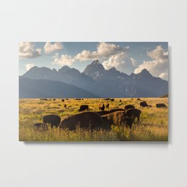 Bison on the Move Metal Print