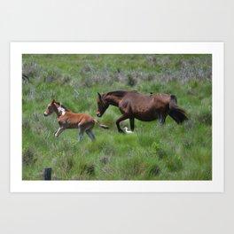 Chincoteague Ponies Art Print