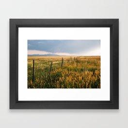 Golden Fields of Colorado Framed Art Print