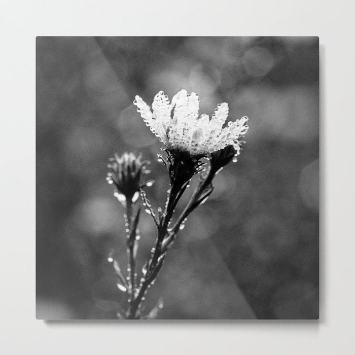 dew drenched Metal Print