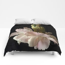 All Things Beautiful Comforters