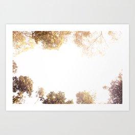 Sky & Woods Art Print
