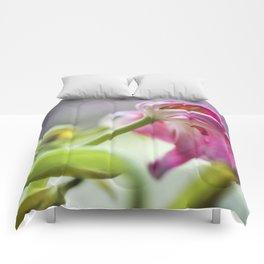 Tulip Tracy Comforters