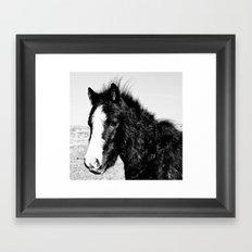 Mini Horse (2) Framed Art Print