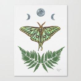Spanish Moon Moth Canvas Print