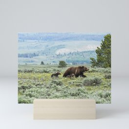 Heading South, No. 2 - Grizzly 399 and Cubs Mini Art Print