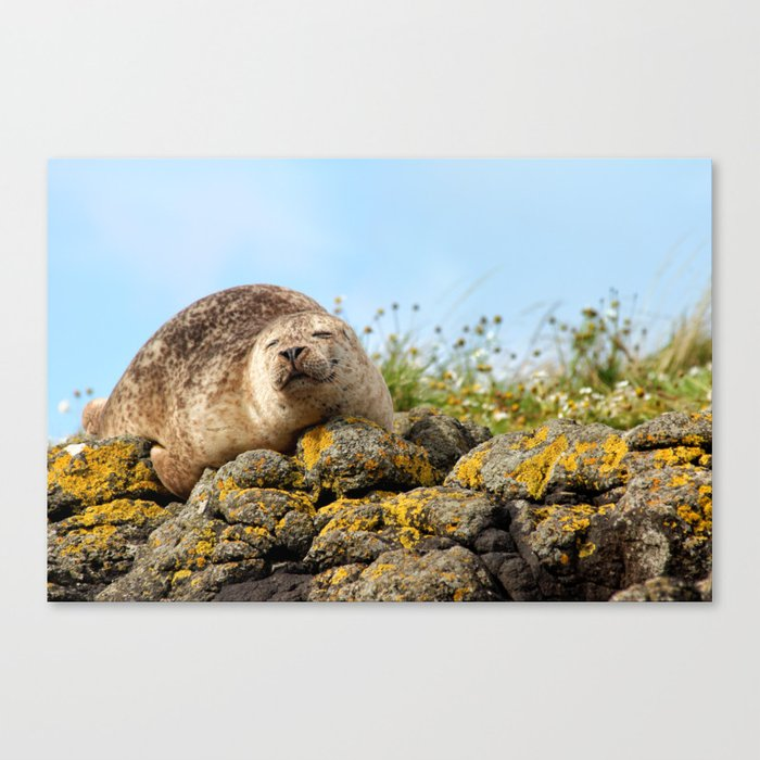 Seal at Dunvegan Castle, Scotland Canvas Print