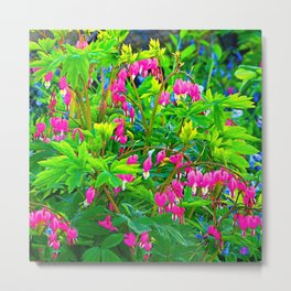 GREEN SPRING GARDEN PINK BLEEDING HEARTS Metal Print