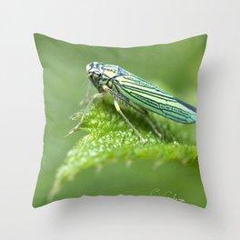 Calvcom Throw Pillow