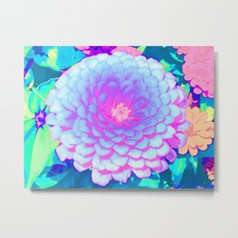 Pretty Purple and Pink Zinnia in the Summer Garden Metal Print