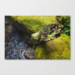 Moss 2 Canvas Print