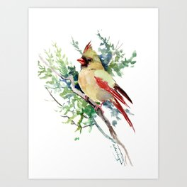 Cardinal Bird Artwork, female cardinal bird Art Print