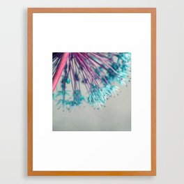 blue allium  Framed Art Print
