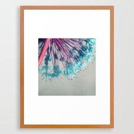blue allium  Framed Art Print