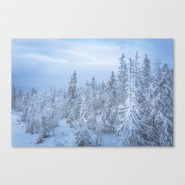 Winter forest in the Mountains Canvas Print