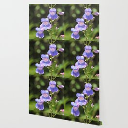 California Native Penstemon Wallpaper