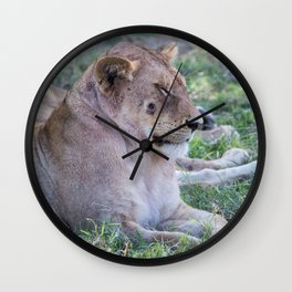 Lioness with a wound, serengeti national park, tanzania Wall Clock