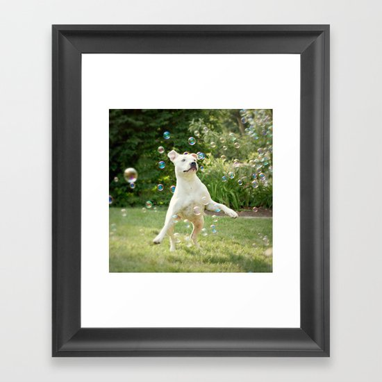Pitbull and Bubbles  Framed Art Print