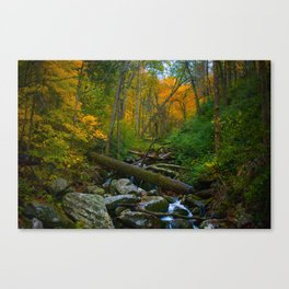 Fall Foilage - Great Smoky Mountains Canvas Print