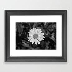 Natures Diamonds  Framed Art Print