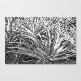 Dyckia in black and white Canvas Print