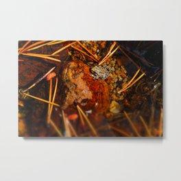 Yosemite Autumn Frog Metal Print