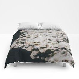 Celestine IV Comforters