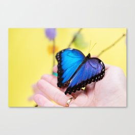 Morpho butterfly sitting on the human hand Canvas Print