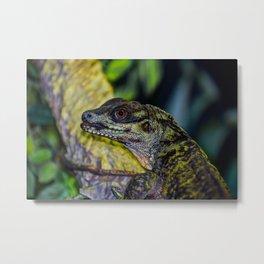 Sailfin Lizard Metal Print