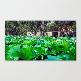 Lotus sea Canvas Print