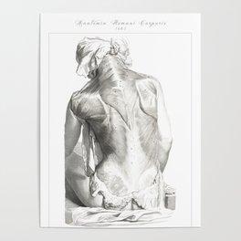 Human Anatomy Art Print SPLENIUS TRAPEZIUS DELTOID Vintage Anatomy, doctor medical art, Antique Book Poster