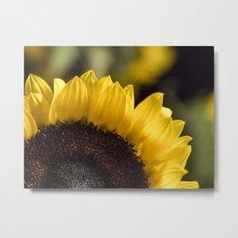 Brown Disk Sunflower Macro 1 Metal Print
