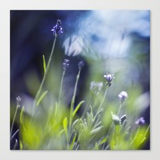 pieces of summer Canvas Print