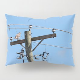 Red Tailed Hawk on Telephone Pole 3 Pillow Sham