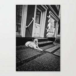Dog in Danmark Canvas Print